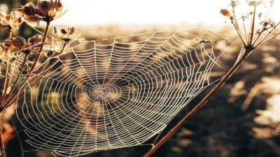 Яд паука может стать чудодейственным лекарством от сердечных приступов