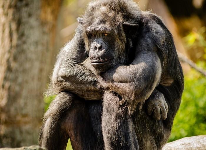 В Бельгии женщине запретили посещать зоопарк из-за романа с обезьяной