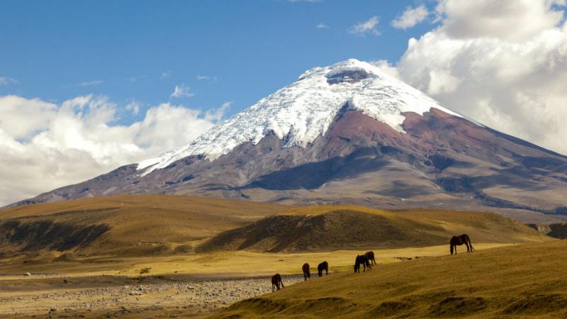 Лошади пасутся у подножия Котопакси. (Ecuadorpostales / Shutterstock) | Epoch Times Россия