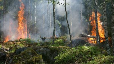 Из-за лесного пожара в Свердловской области эвакуировали пациентов ковидного госпиталя
