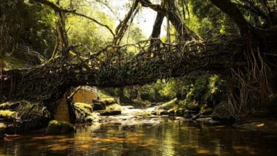 Удивительные мосты из живых корней в Индии