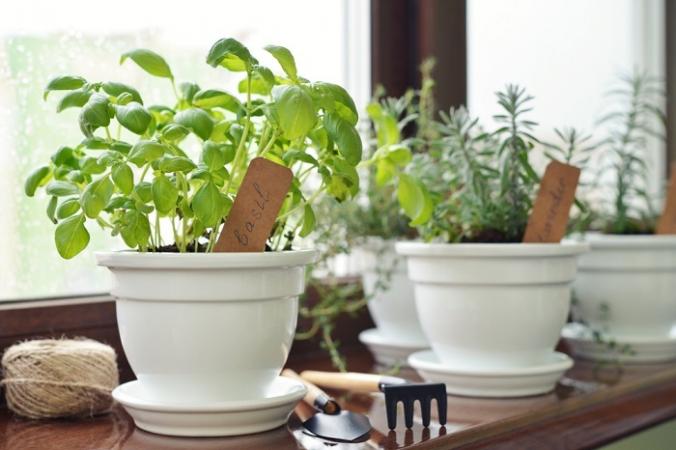 Растения мяты, лаванды и базилика, установленные на подоконниках, отлично справляются с отпугиванием мух. (mama_mia / Shutterstock) | Epoch Times Россия