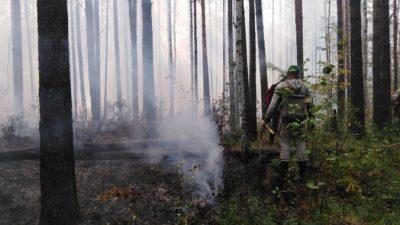 Из-за лесного пожара на Урале эвакуировали персонал и постояльцев санатория. Дым дошёл до Екатеринбурга