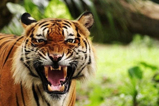Существует множество популярных китайских фраз, в основе которых лежит иероглиф 虎, обозначающий тигра.(Изображение: <a href=