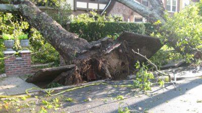 Сильный ветер в Москве повалил почти 50 деревьев и повредил 24 автомобиля