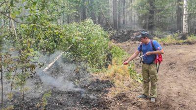 Площадь лесного пожара под Екатеринбургом возросла до 500 га