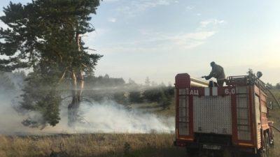 В Волгоградской области крупный лесной пожар подошёл к хутору
