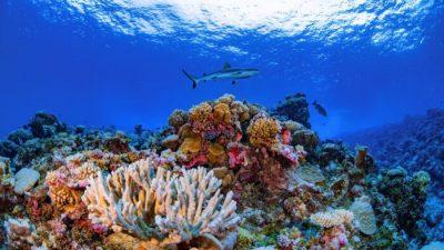 Исследователи составили первую в истории детальную онлайн-карту коралловых рифов мира
