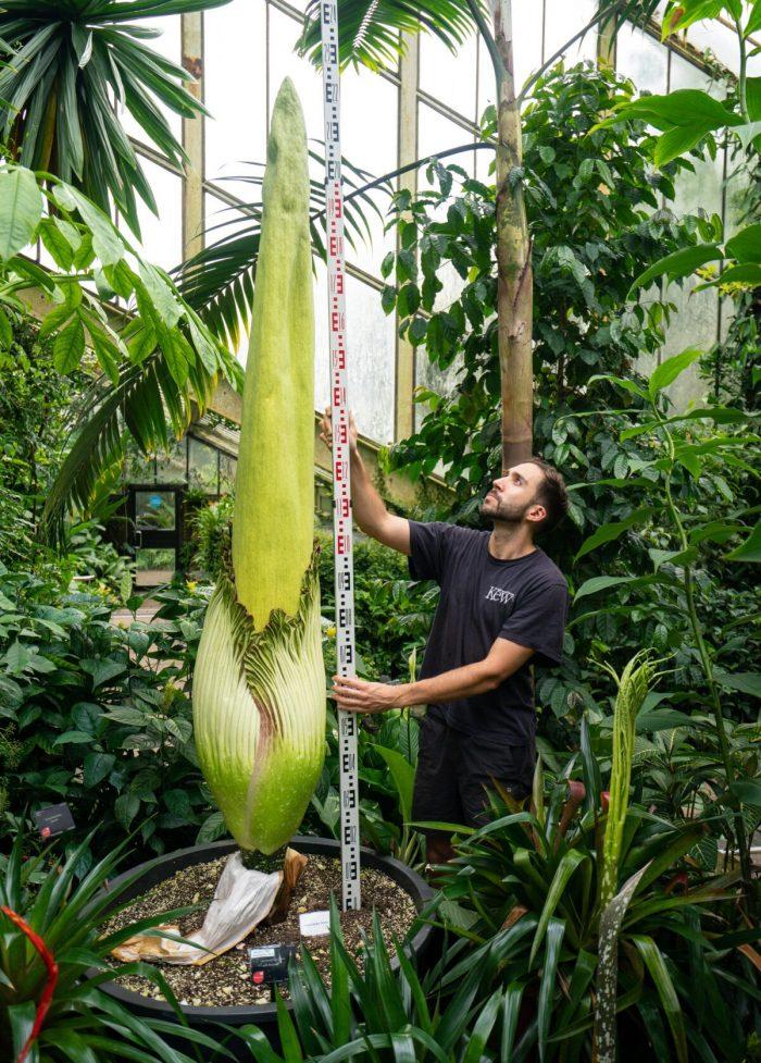 Королевские сады Кью попали в Книгу рекордов Гиннеса за 17000 растений