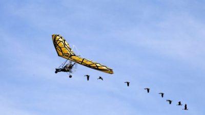 Женщина пролетела с гусями над Альпами