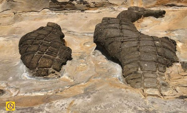 Скальные образования в геопарке Елю на Тайване