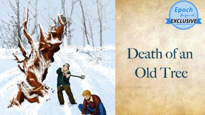Старые мудрые сказки. Смерть старого дуба