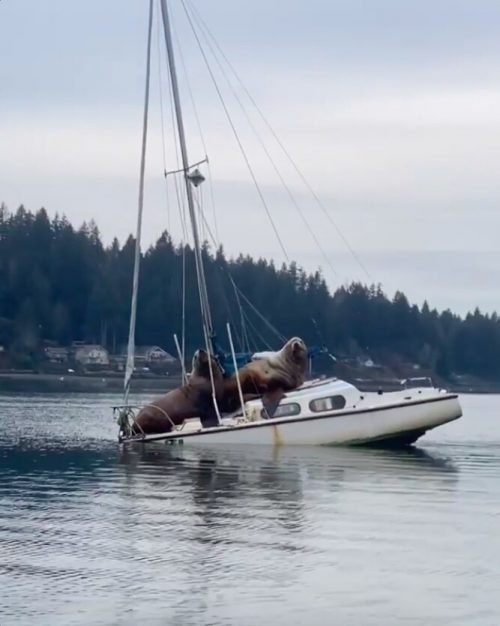 Видеосвидетельство захвата катера морскими львами