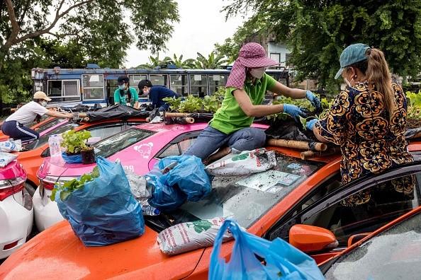 Работники таксопарка высаживают растения накрышах такси, которые вынуждены простаивать. (Jack TAYLOR/AFP via Getty Images)
