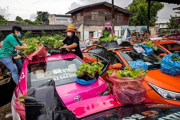 Сотрудники компании по аренде такси сажают овощи на крышах автомобилей компании, поскольку не работают из-за снижения заказов после начала пандемии Covid-19, Бангкок, 15 сентября 2021 года. (Jack TAYLOR/AFP via Getty Images)     Epoch Times Россия