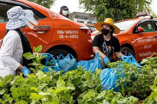 Работники местного таксопарка готовят кпосадке рассаду овощей накрышах некоторых автомобилей. (Jack TAYLOR/AFP via Getty Images)
