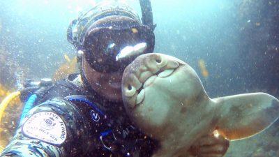 Нежная дружба аквалангиста и бычьей акулы