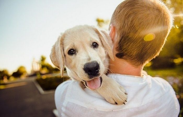 Человек и собака. Фото: Helena Sushitskaya/Pixabay/Pixabay License | Epoch Times Россия