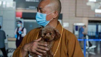 Монах Чжи Сян спас тысячи бродячих животных