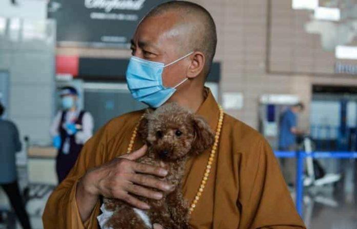Чжи Сян привык к животным, так как вырос на ферме, где у его семьи и соседей были животные. (Image: ffr.littlemastersclub.orgvia Bao'en Temple)    Epoch Times Россия