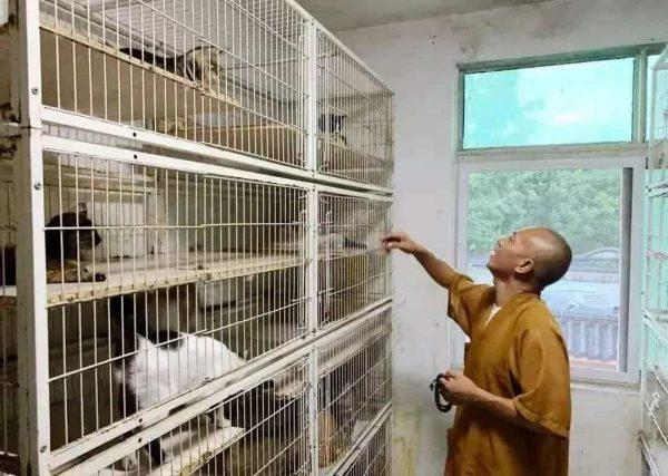 В Общественном Центре по Контролю за Бездомными Животными Шанхая Чжи принимает животных, от которых отказываются, и собирает ящики, полные многочисленных бездомных собак и кошек, пойманных в тот день местной полицией, делая им прививки и давая различные лекарства. (ffr.littlemastersclub.org via Bao'en Temple)
