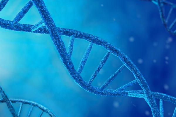 Как утверждает компания, «если мутировавшая самка укусит человека, хотя это маловероятно, и её ДНК попадёт в кровь, нет никаких признаков того, что это вызовет побочный эффект». (Apartura via Dreamstime)