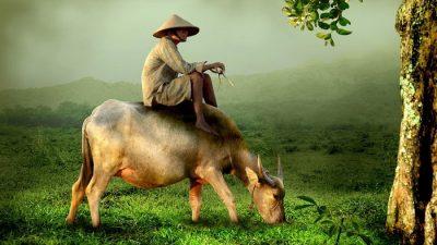Дурак и богач. Китайская народная сказка