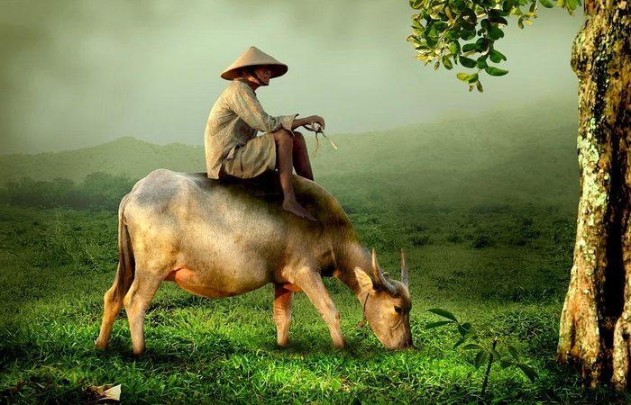 сказка, корова, китай