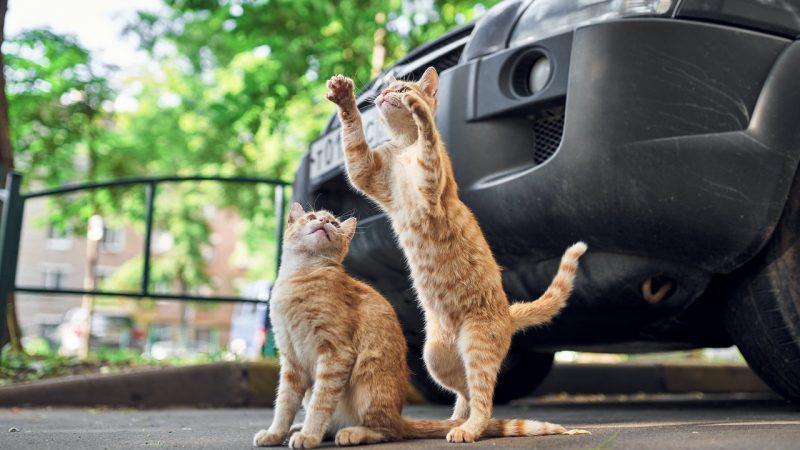Интересные факты о кошках. Фото: / pexels.com / CC0 1.0    Epoch Times Россия