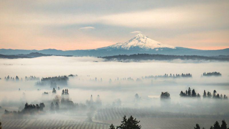 Долина Уилламетт — сердце винодельческого региона штата Орегон. (Leslie Brienza/Shutterstock)   Epoch Times Россия