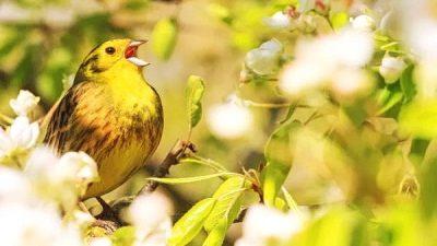 Уганда — птичий рай