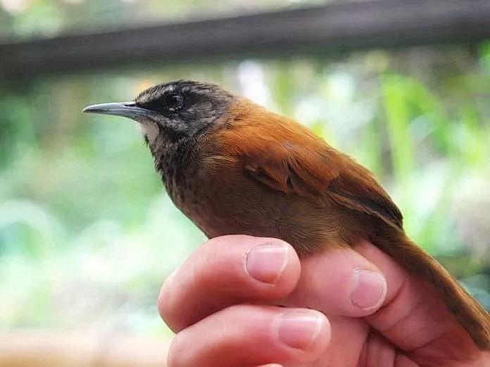 Певчие птицы поют синхронно и вовремя вступают в соло