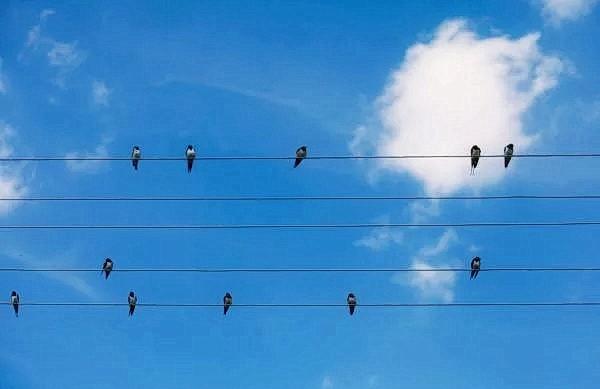 Эта удивительная координация приводит к тому, что можно назвать телепатическим действием. (Изображение: Oksix /Dreamstime)