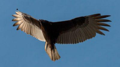 На Кубе два орла врезались в самолёт с российскими туристами