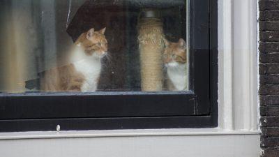 Из разрушенного дома в Ногинске волонтёры спасают животных