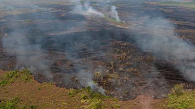 В Екатеринбурге снизилось содержание вредных веществ в воздухе