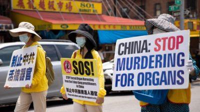 Китай не отвечает на вопросы ООН о насильственном извлечении органов