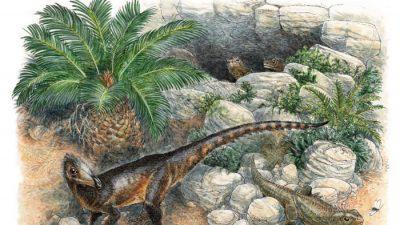 Обнаружен крошечный динозавр-мясоед