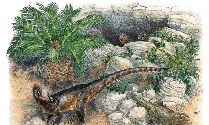 Иллюстрация самого древнего известного динозавра-мясоеда из Великобритании — животного размером с курицу, длина хвоста которого составляла бы один метр. James Robbins/Natural History Museum via PA   Epoch Times Россия