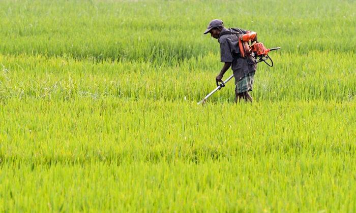 Шри-Ланка запретила ввоз в страну загрязнённых удобрений из Китая