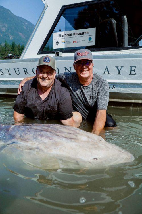 Гигантский осётр длиной 3,5 метра был пойман в Британской Колумбии
