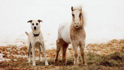 Спасённых лошадку и собаку объединяет особенная связь