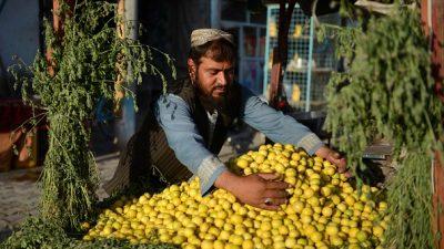 ВАфганистане нарастает гуманитарный кризис