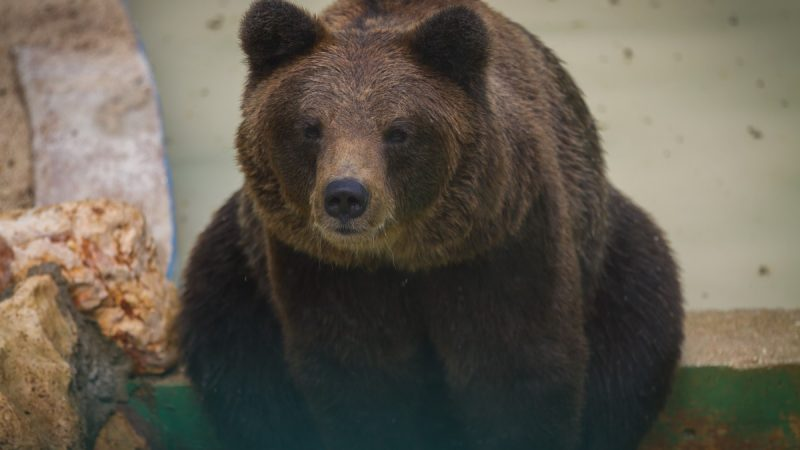 В орловском цирке медведь напал на беременную дрессировщицу