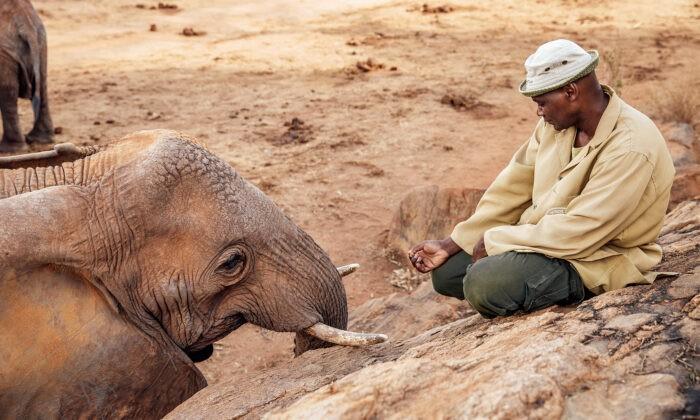 Фото предоставлено Sheldrick Wildlife Trust | Epoch Times Россия