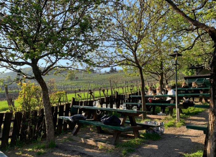 Поход по виноградникам Вены