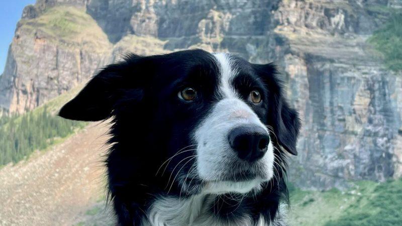 Собака автора. (Tami Ellis) | Epoch Times Россия