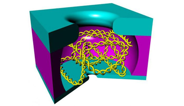 Наноразмерная клетка.(Image: Stein lab / Brown University)