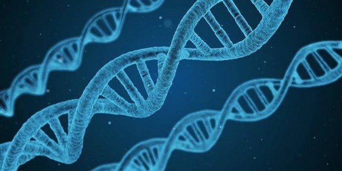 Организм обладает естественным иммунитетом, который может помочь защитить отнового коронавируса. Фото: Arek Socha/Pixabay/Pixabay License    Epoch Times Россия