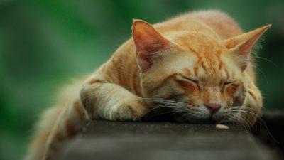 В музей Анны Ахматовой в Санкт-Петербурге вернулся пропавший кот
